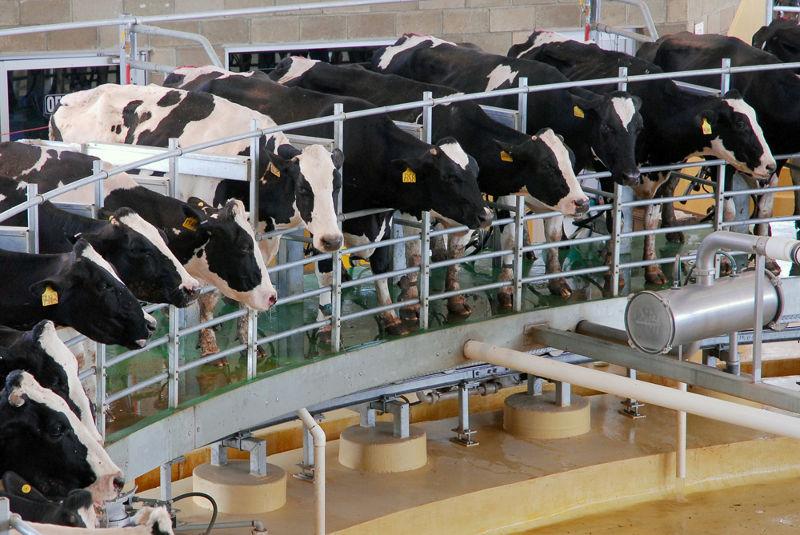 Suspensión de exportaciones abarca diversos productos lácteos