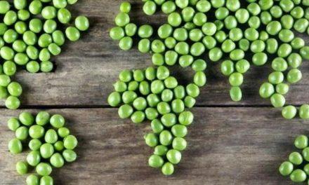 ¿Qué pasaría en el mundo si todos fuéramos vegetarianos?