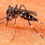 MSP descartó que la ola de mosquitos traiga riesgos de contraer dengue