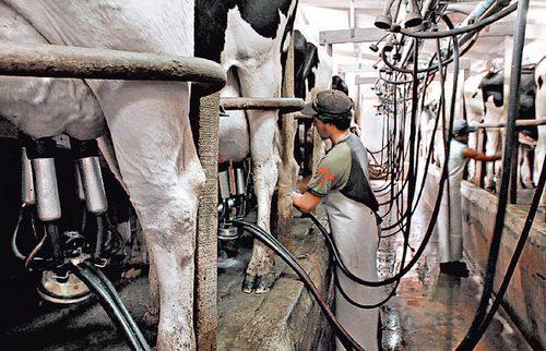 Ejecutivo presentó medidas que mejoran situación económica de más de 2.000 productores lecheros