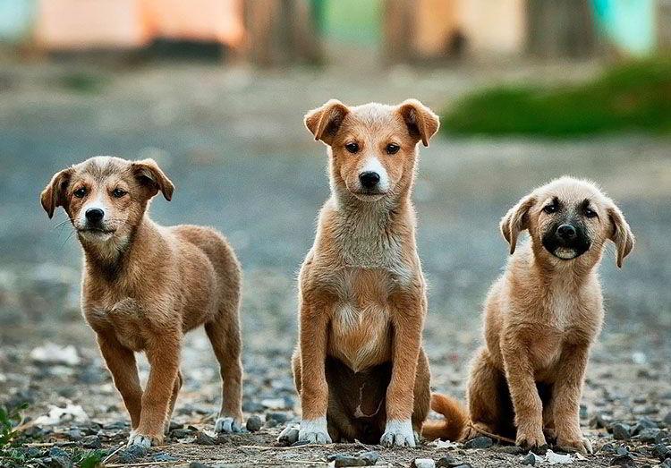 Jornada de adopción de perros en Paysandú