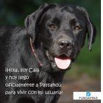 FUNDAPPAS entrega primera perra adiestrada como guía en Paysandú