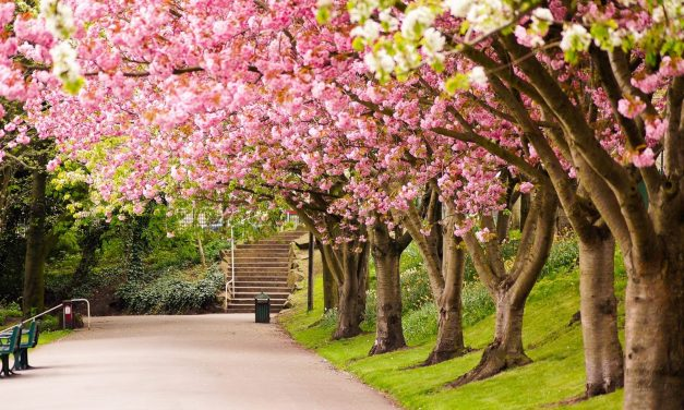 ¡Primavera a la vista! Gran fin de semana con CAFÉ EXPRESS