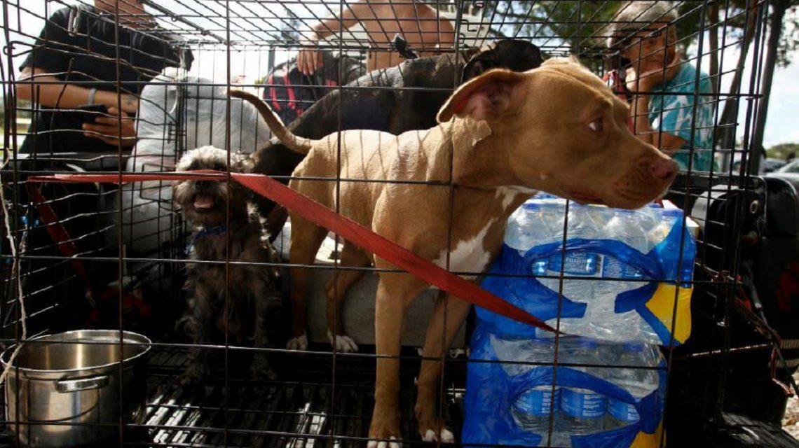 Cargos criminales para quienes abandonaron mascotas en el huracán Irma