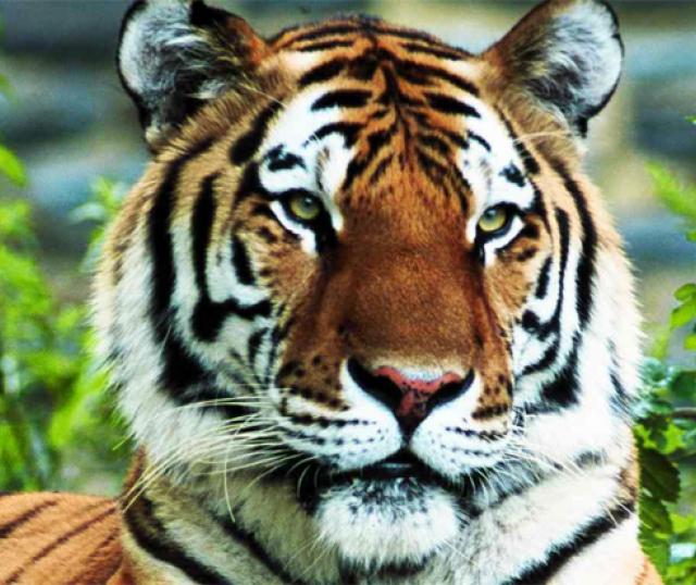 Estas son las especies animales en peligro de extinción