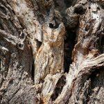 El reino del camuflaje en la naturaleza