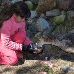 Nueva liberación de animales recuperados en SOS Fauna Marina de Punta Colorada