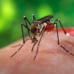 Capacitación en enfermedades transmitidas por el Aedes Aegypti