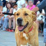 """""""5º Desfile de perros abandonados"""" exitosa experiencia en Valencia"""