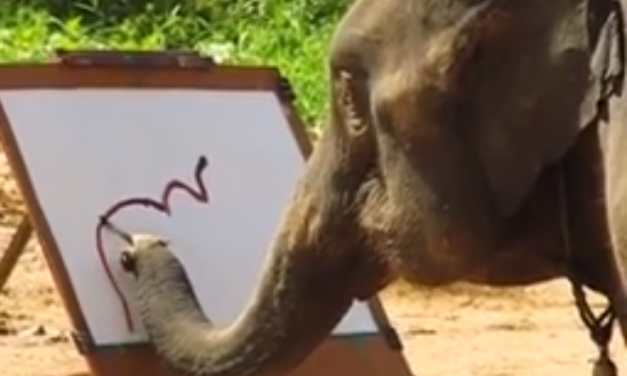Elefantes pintando. Increíble video.