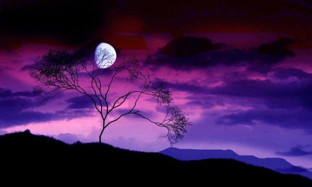 Noches Parejas una propuesta para solos y solas