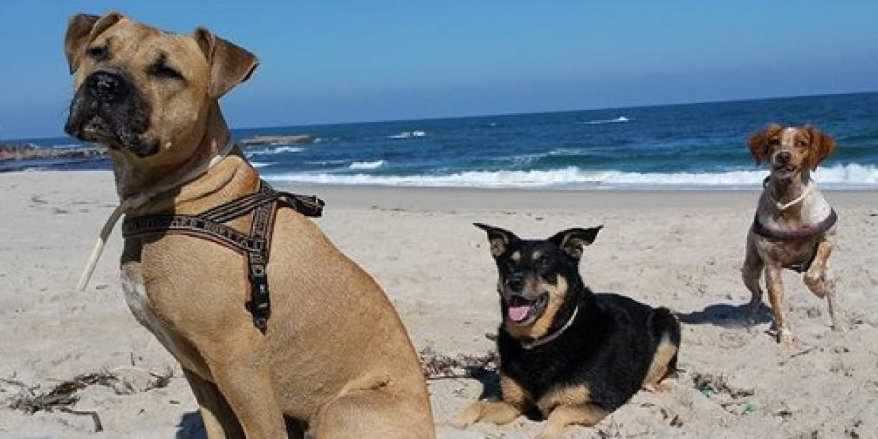 Playas habilitadas para mascotas en Maldonado