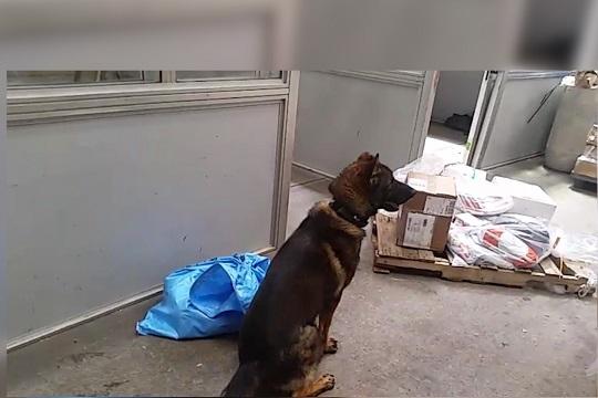 Baco encontró droga entre juguetes y caramelos