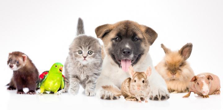 ¿Cuál fue la mascota que marcó tu vida?