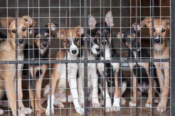 #No compres, adopta: campaña española para adoptar animales en Navidad