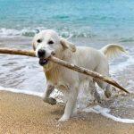 Canelones marca el rumbo y habilita playas para mascotas