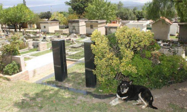 Murió Capitan, el perro que estuvo al lado de la tumba de su amo fallecido hace 10 años