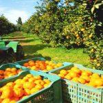Destinan U$S 4 millones a productores frutícolas afectados por el tiempo