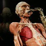 """""""Body Worlds vital"""" continúa hasta fines de marzo en Patio Rambla"""