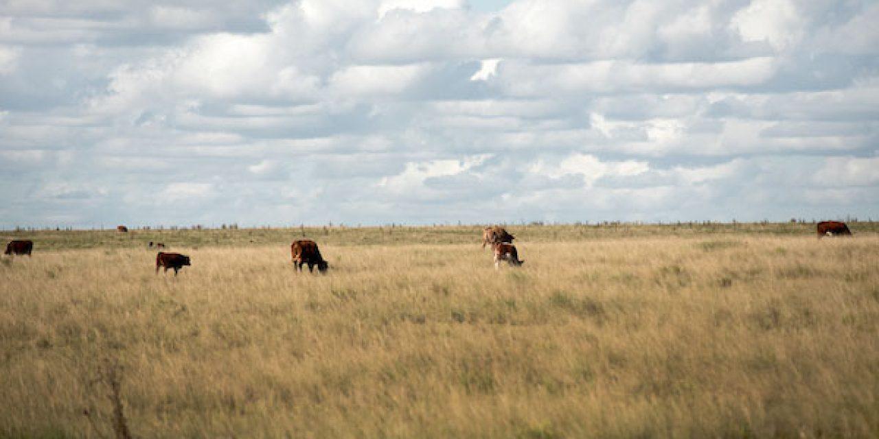 Sequía en Tacuarembó afecta al sector agropecuario señalan autoridades y productores