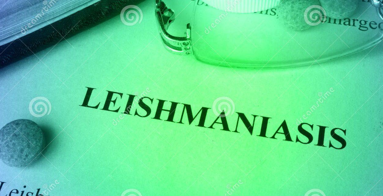Partido Nacional reclama por medidas ante leishmaniasis humana