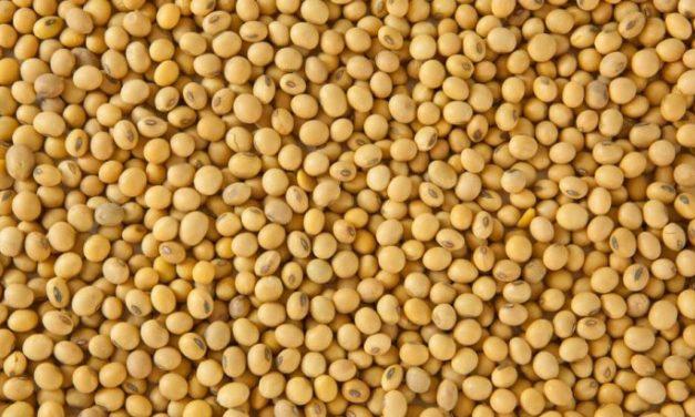 ¿Qué fue lo que hizo que la evolución de la soja disminuyera?