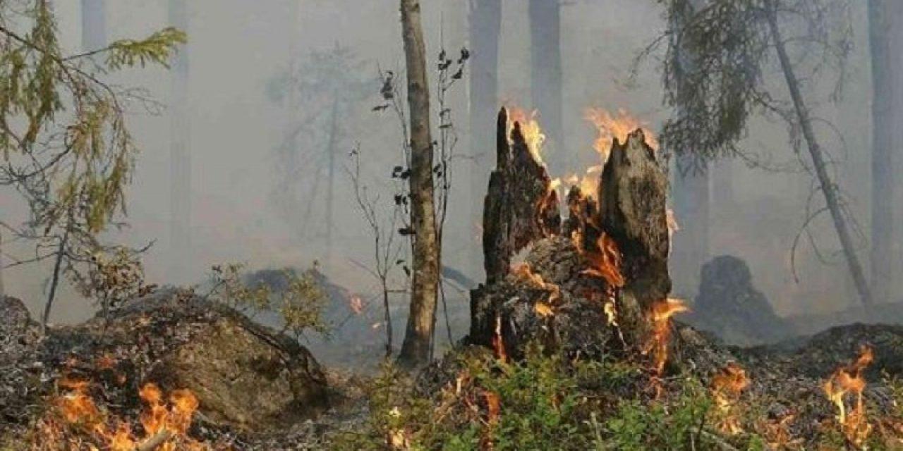 «Lo que ocurre con las quemas es una depredación de los biosistemas»