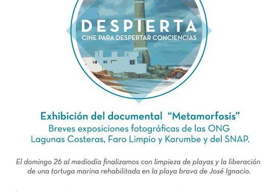 """""""Despierta"""", una actividad en José Ignacio de limpieza de playas, liberación de tortugas y concientización del medio ambiente"""