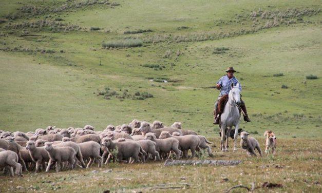 La importancia del agro en la cadena productiva: columna de Julio Carzoglio