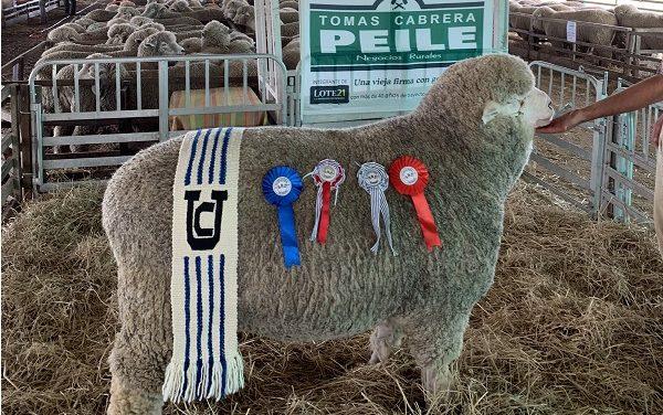 """Balance positivo del remate anual de Corriedale y Hampshire Down de Cabaña """"La Estela"""""""