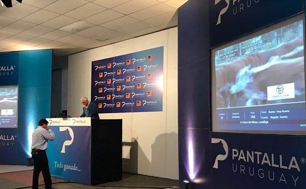 Balance positivo del remate de Pantalla Uruguay