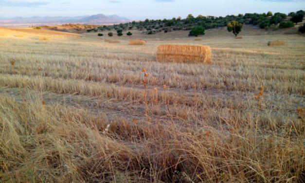 ¿Qué propone el BSE para los cultivos agrícolas de secano y arroz?