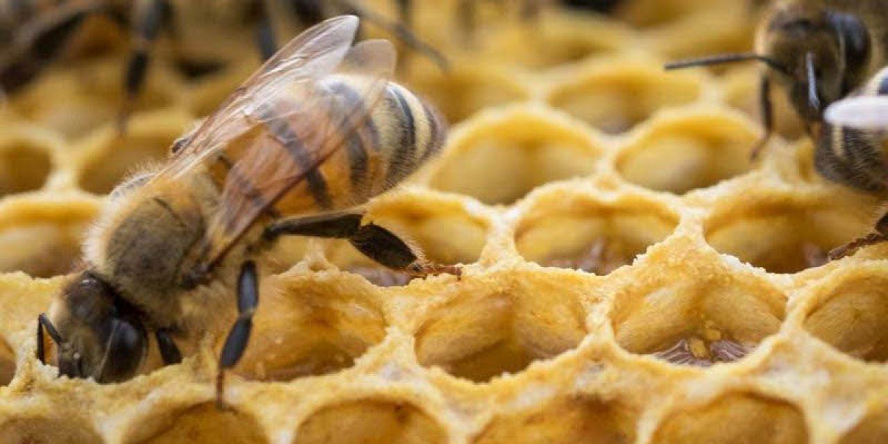 Los valores internacionales de la miel y el actual momento de la apicultura
