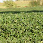 BSE y los seguros de los cultivos de verano
