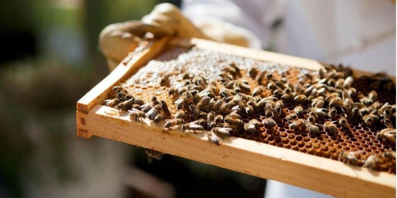 La situación del sector apícola de cara a cosecha de eucaliptus